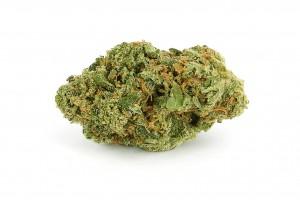 Menu - Flower - Hybrid - Tropicana (premium)
