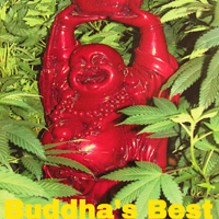 Buddha's Best – Bud Man Huntington Beach