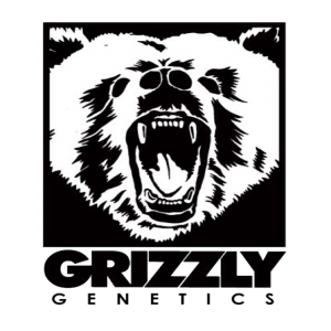 Grizzly Genetics - Bud Man OC