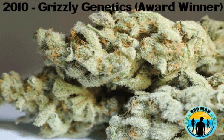 Grizzly Genetics – Cannabis Cup Winner - Bud Man OC
