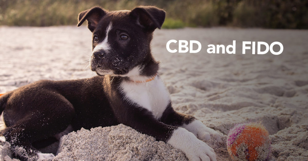 CBD and Fido